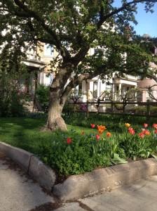 Garden on Blackstone Ave May 2014