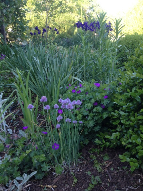 Chives contribute to this blue-green haze