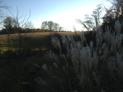 Hayfield with tall grass